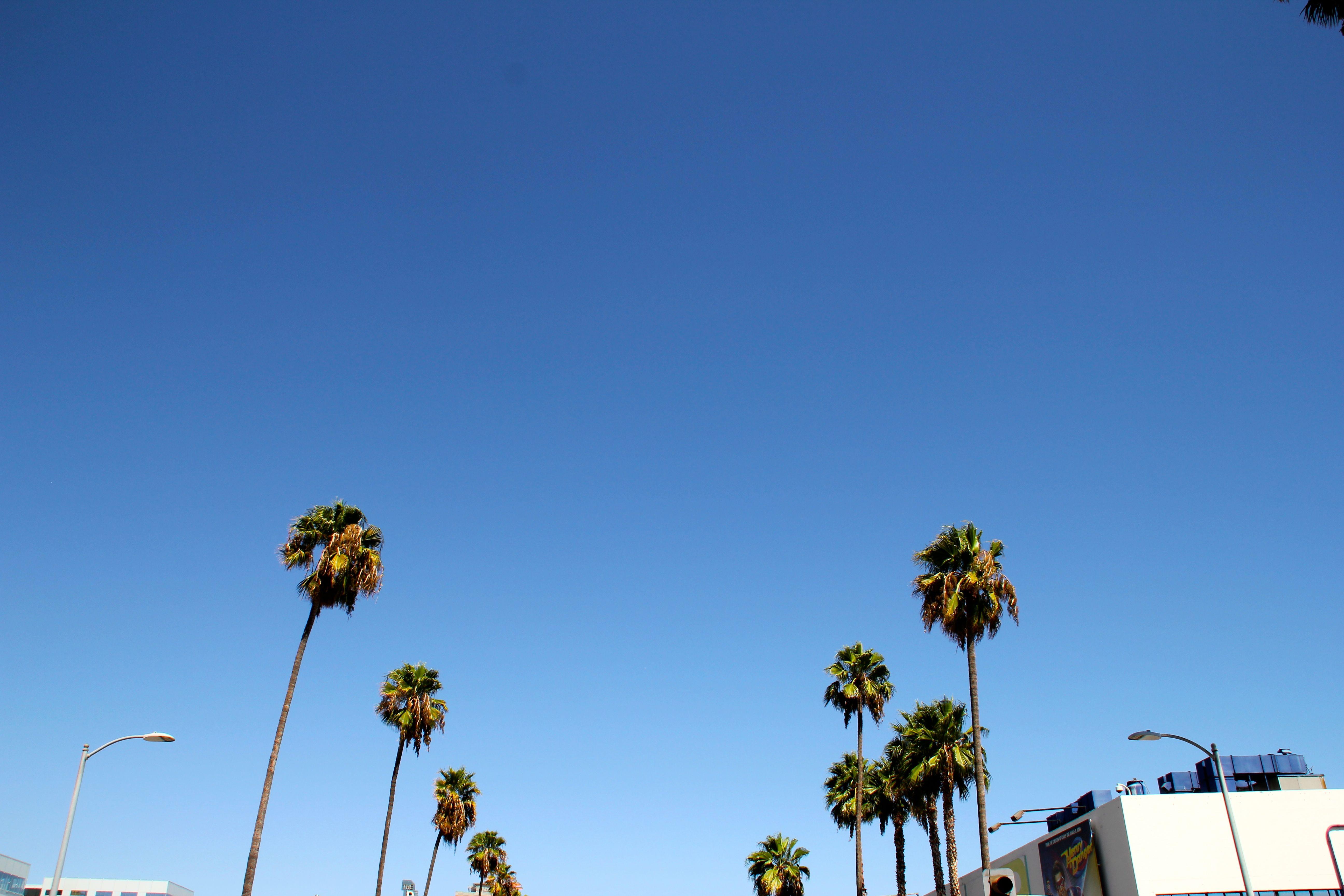Los Angeles, perché tutti ti odiano? 7