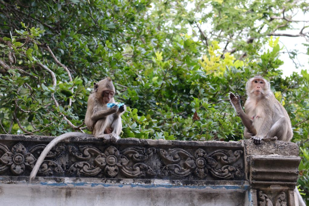 cosa visitare a battambang