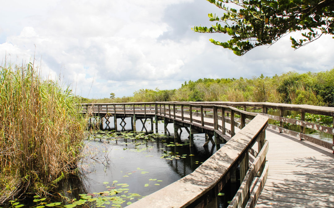 Visitare l'Everglades National Park: un tuffo nella natura a due passi da Miami